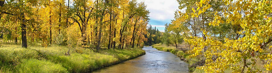 Main Fish Creek PP Banner For Autumn
