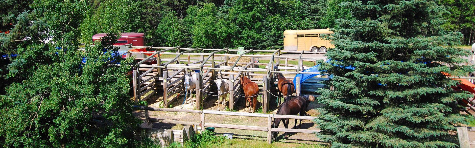 Equestrian Camping Kananaskis Country Alberta Parks